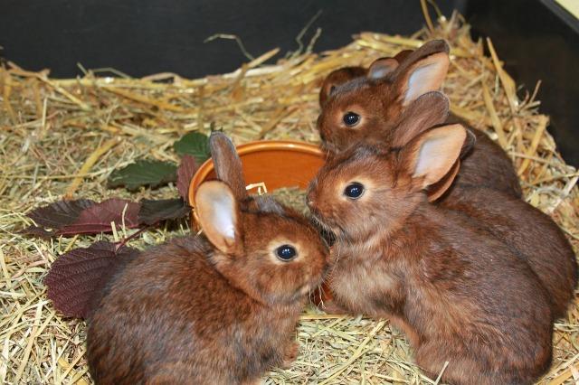 child-rabbits