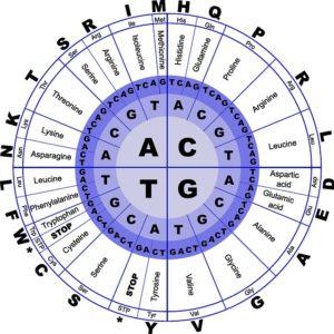 amino-acid-code
